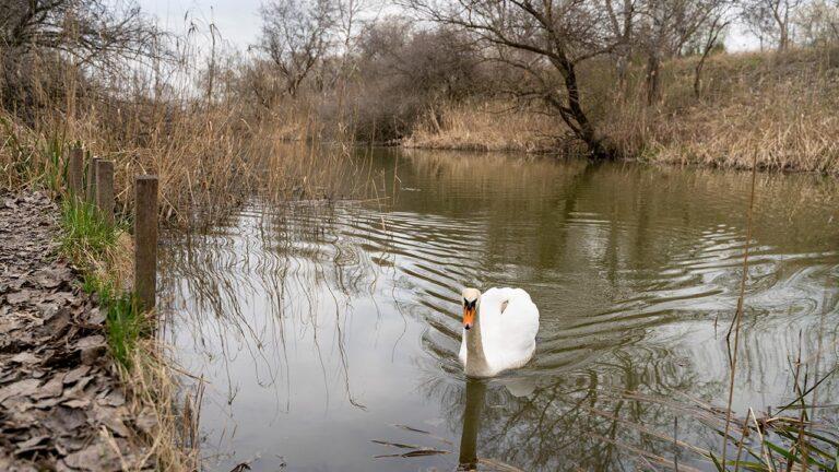 Csatorna, ami Dunaharasztiból ered